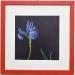 fiore-trabucco-bianco