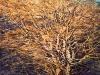 grande-albero-inverno
