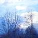 rami-e-nuvole
